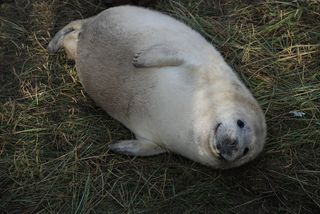 Donna Nook Seal Sanctuary 007